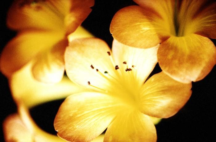 FLOWERS-III