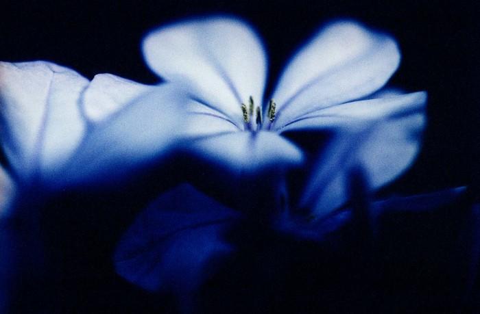 FLOWERS-VII