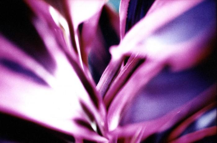 Flowers VIII